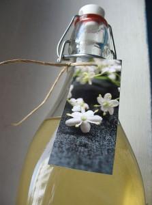 Limonade de sureau noir bio, Sambucus nigra